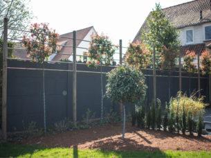 Palissage d'arbres avec parterre d'hortensias